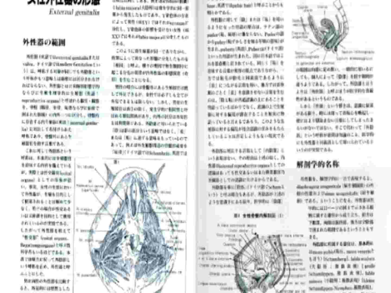 日本女性の外性器① 人気作  10枚 3